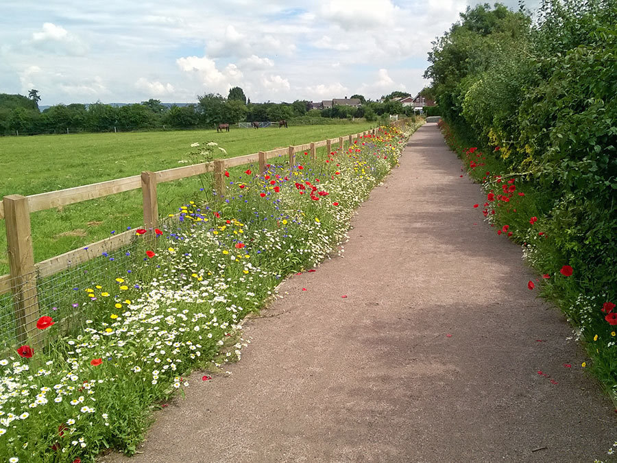 An even and wide country path, bordered by wild flowers and a new wooden fence.