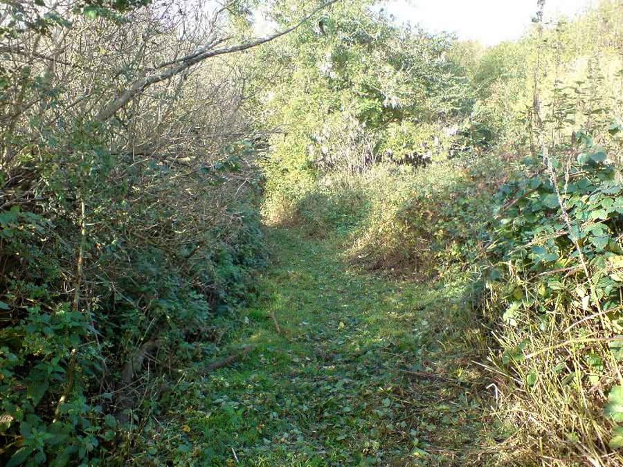 A narrow overgrown track without paving, between two overgrown hedgerows